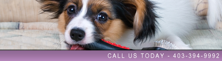 Dog Grooming in Lethbridge